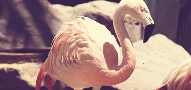 flamingo wildlife